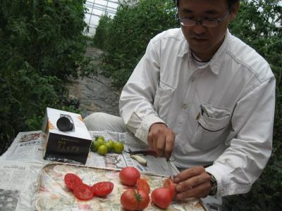 トマトの鈴木さん