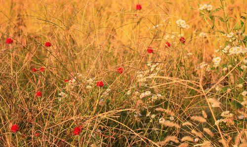 河内森・野の花