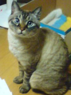 猫の「にょんち」。