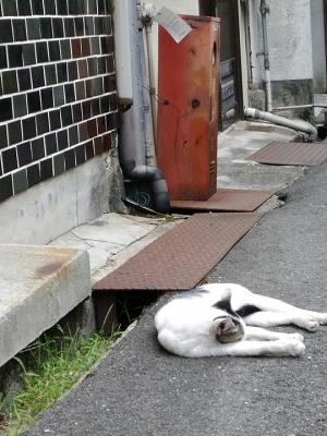 尾道商店街,ネコ