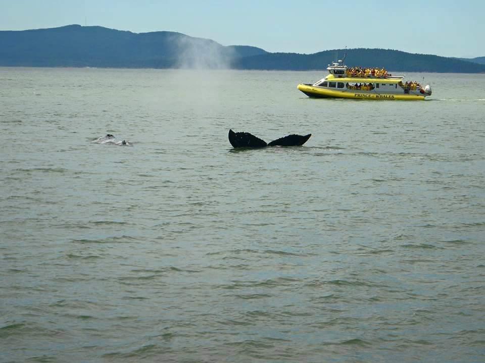 クジラ バンクーバー