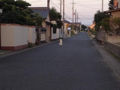 写真 2012-10-26 16 35 41.jpg