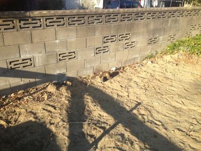 写真 2012-12-20 14 34 46.jpg