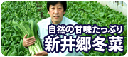 新井郷冬菜