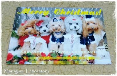 ルルン♪さんからのクリスマスカード1