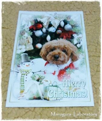 Juliaさんからのクリスマスカード1