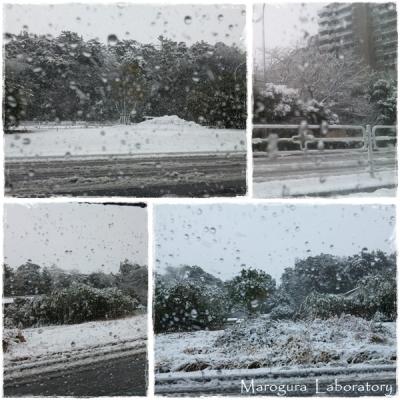 雪20130114