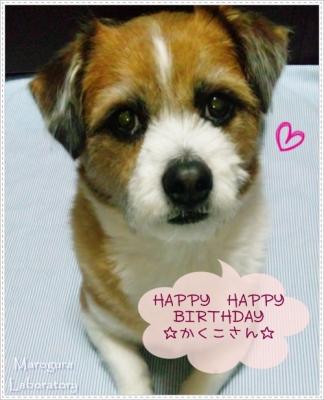 かくこさんのお誕生日お祝いブログ用20130406