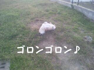 20111020_080006.jpg