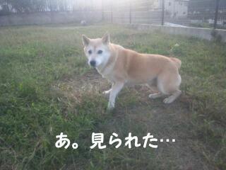 20111020_080120.jpg