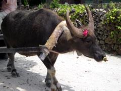 水牛車の水牛