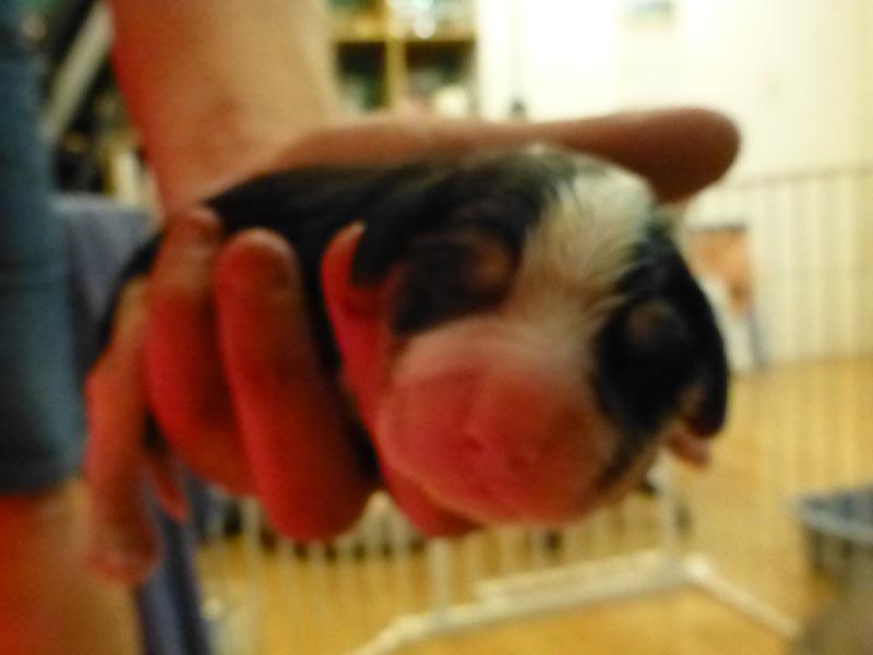 P1070072_puppy.jpg