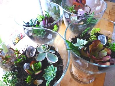 P1110185_succulent.jpg
