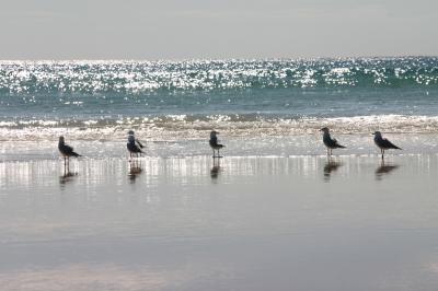 IMG_5140_beach.jpg