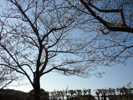 ユリックスの桜並木