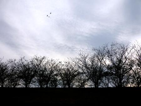 ユリックスの夕空