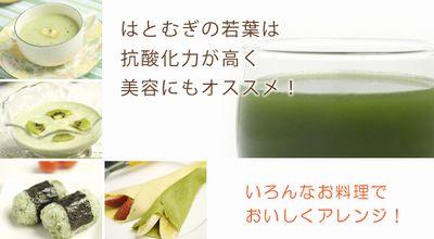 ハトムギの若葉の青汁入り料理アラカルト
