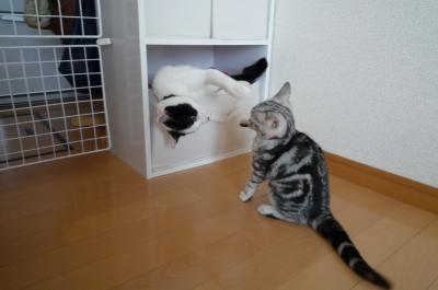 ユキオとイサコ