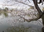 fudai_ike_left001