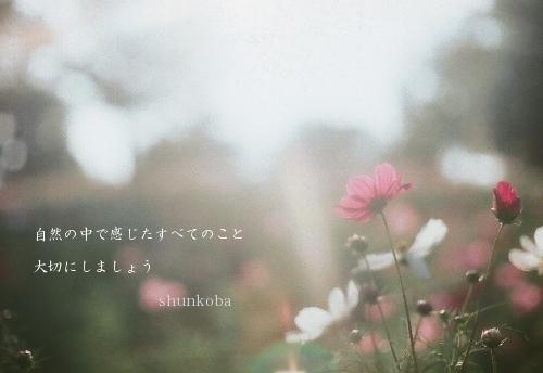 FILM-150_自然_NIKOMATFT_PRO400H