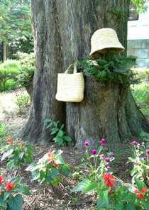 大倉山記念館の樹木の中で