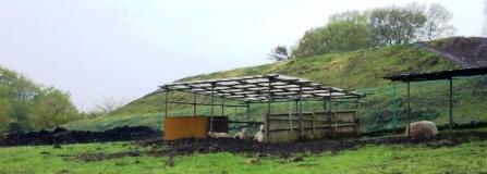 磯沼牧場の羊たち
