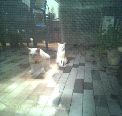 140903_さんごと白いこ.jpg