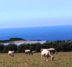 イングランドの羊IMG_0651.jpg