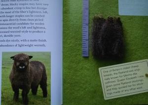 ライランドについてDSC_1789  羊の本より .jpg