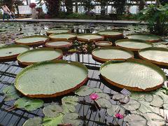 花鳥園-1