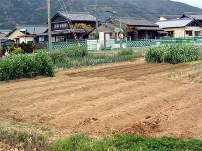 2008/04/07_店横の畑