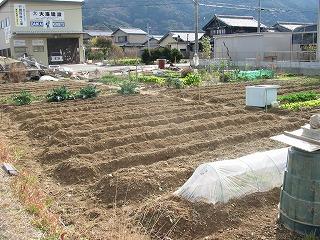 横の畑_2010_01_20