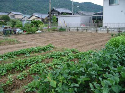 畑_2010-09-24