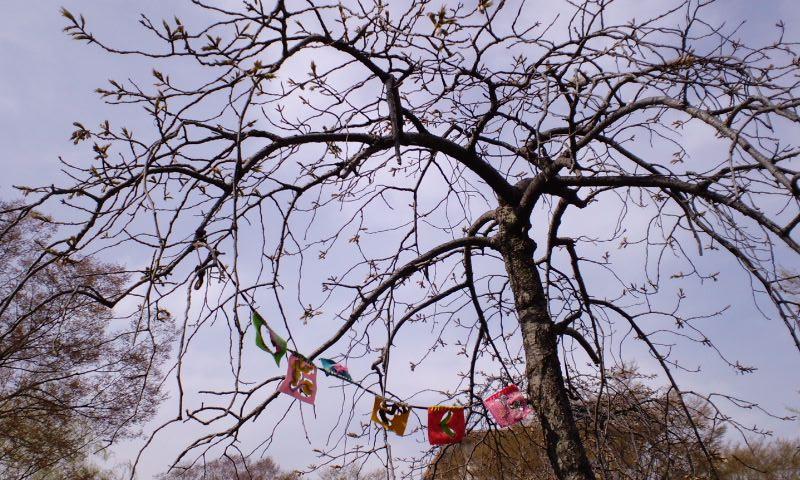 4/4井野団地の桜5