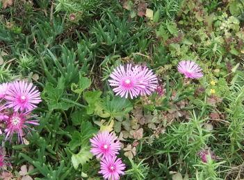 足元に咲いていた花