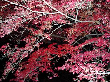 夜の紅葉・京都