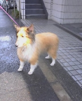 迷い犬です。