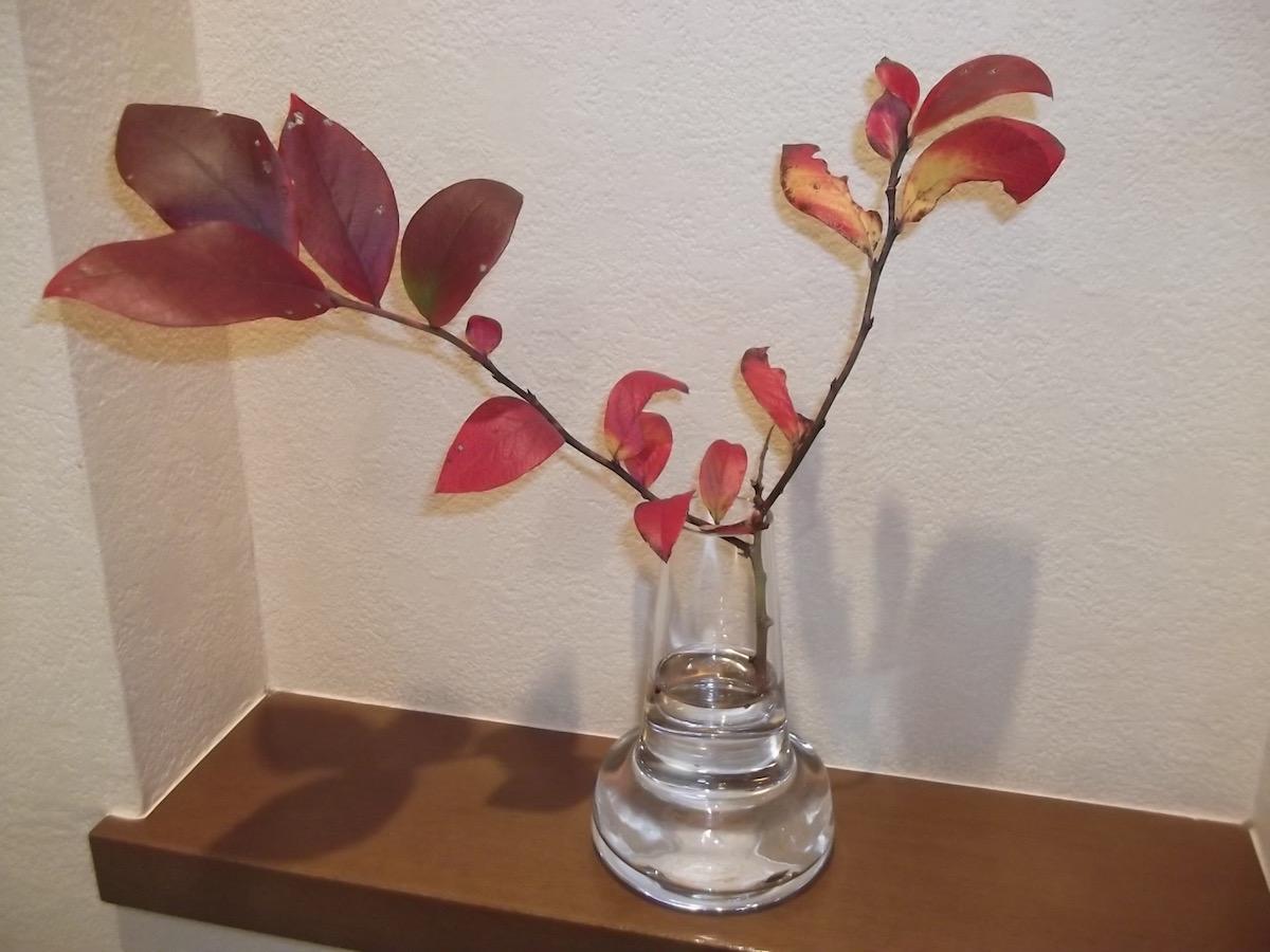 紅葉 in Floraベース
