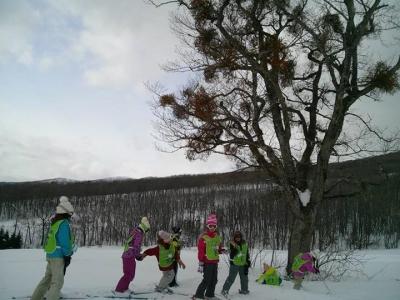 ウサギの足跡、動物の足跡探検、そして木の種類など子供たちは興味津々です!