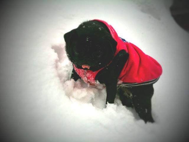 雪かき2011-2