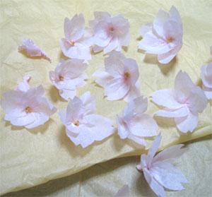 桜の花のディスプレイ