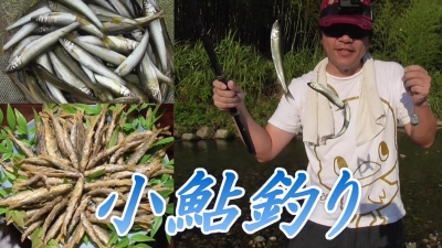 小鮎釣り100匹大漁