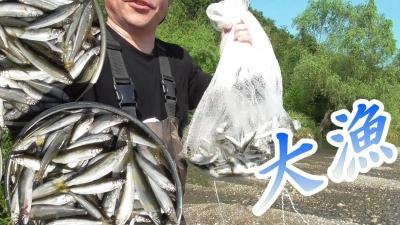 投網で小鮎500匹大漁だ
