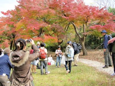 箕面山荘での紅葉
