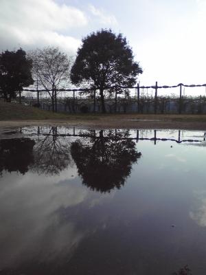 市川動植物園-46.JPG