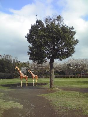 市川動植物園-48.JPG