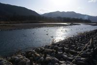犀川の白鳥湖
