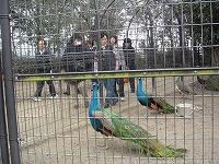 鳥類センターにはきれいな鳥がたくさん!