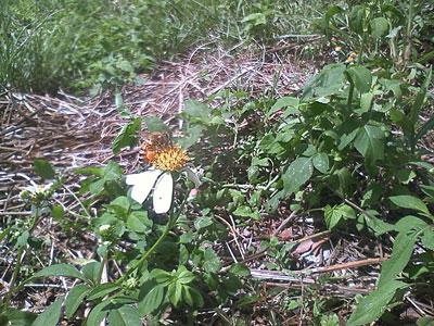 ミツバチ 沖縄
