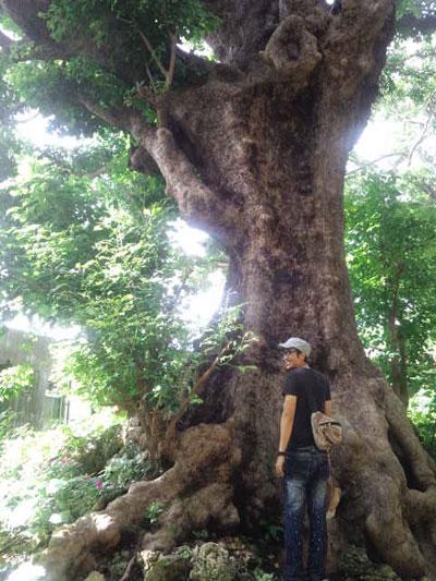 沖縄 首里 赤木